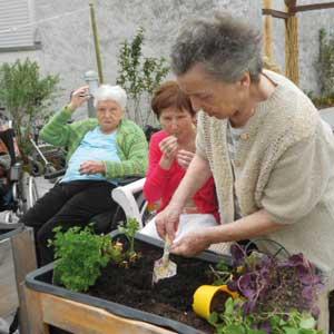 Eine alte Frau pflanzt Blumen in ein Hochbeet.